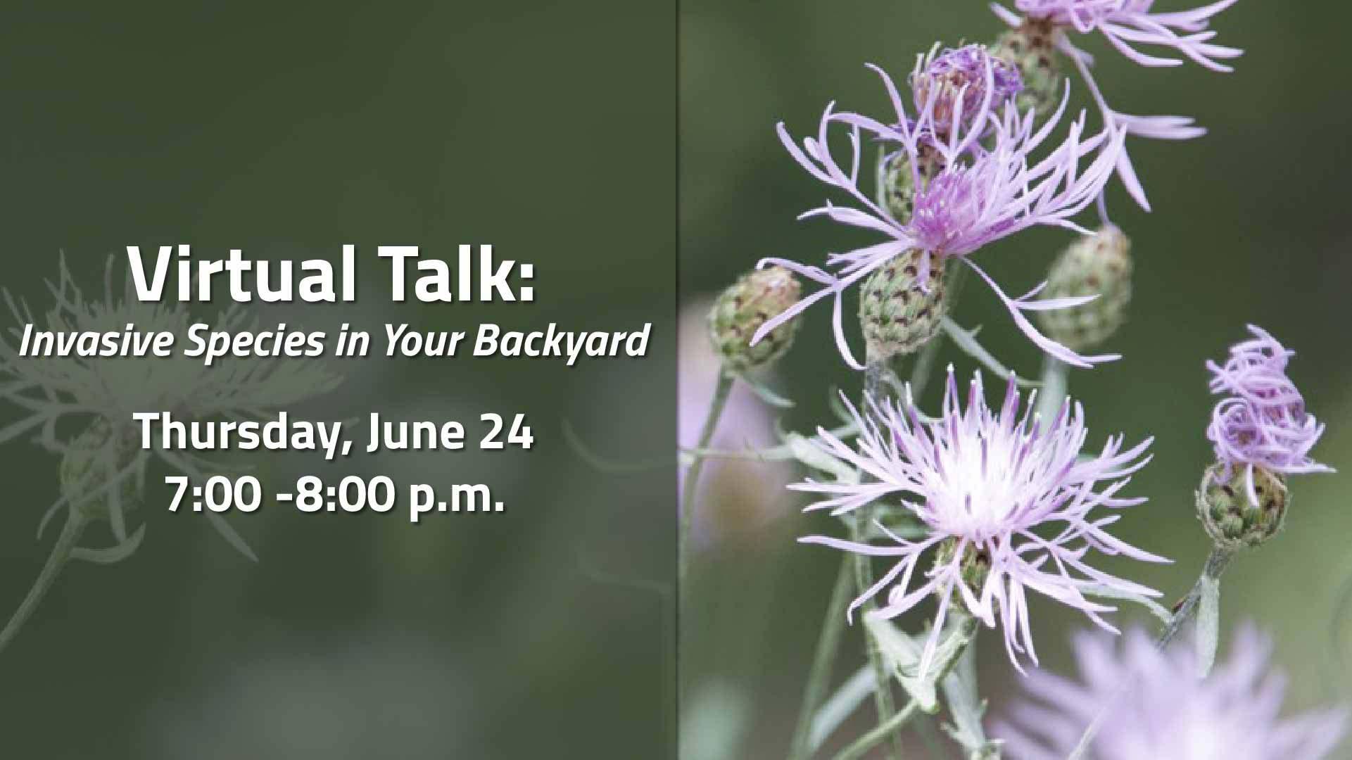 Invasive Species in your Backyard event image